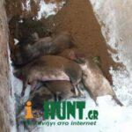 Συμμετοχή της ΚΟΜΑΘ σε σύσκεψη για την αφρικανική πανώλη των χοίρωn