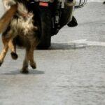 Σοκάρει η περιγραφή νεαρού που έσωσε τον 22χρονο από την μανία αδέσποτων σκύλων
