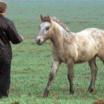 Το μυστήριο με τα άγρια άλογα του Chernobyl
