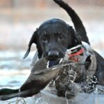 Ζώα και COVID-19: ύποπτοι οι σκύλοι στη μετάδοση του νέου θανατηφόρου ιού