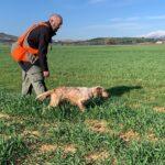 Ζώνες Εκγύμνασης Σκύλων 20 έτη εφαρμογής:  ωφελούν ή όχι;