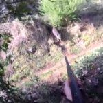 Δύο στα δύο σε κυνήγι αγριόχοιρου στη Σαρδηνία....VIDEO