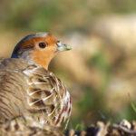 Οι κυνηγοί είναι το κλειδί για την επιτυχία της στρατηγικής για τη βιοποικιλότητα