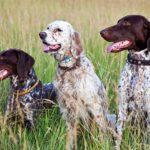 Α'ΚΟΚΔ : Σωστά έπραξαν οι θηροφύλακες που κατάσχεσαν τους κυνηγετικούς σκύλους