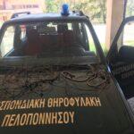 Σύλληψη για λαθροθηρία αγριόχοιρων με θηλιές