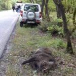 Τροχαίο με αγριόχοιρο στον επαρχιακό δρόμο Καλαμπάκας-Γρεβενών