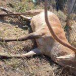 Άγνωστοι σκότωσαν ελάφι στην περιοχή της Πάρνηθας