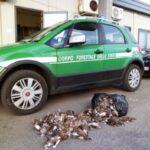 Ετοιμάζεται απόβαση Ιταλών κυνηγών στη χώρα μας